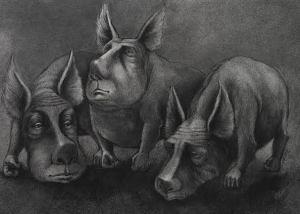 n pigs